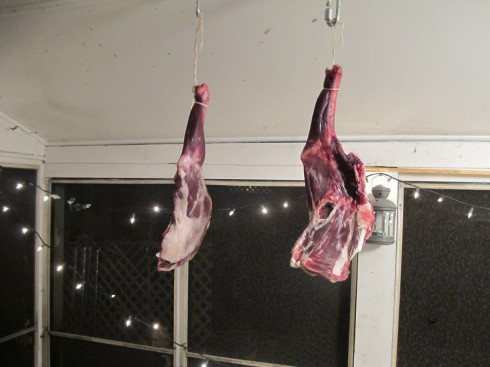 goat hams hang on the back porch